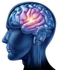 Cervello emotivo