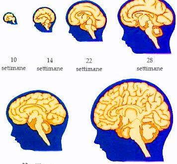 Affetti emotivi, omeostatici e sensoriali