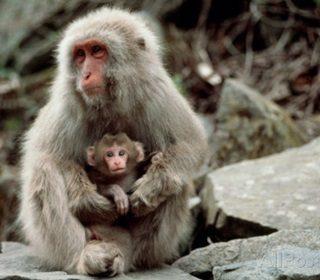 Animali e sentimenti: oltre lo specismo